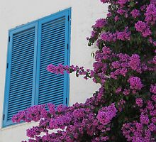 Blue shutters and bougainvillea by Elena Skvortsova
