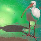 Ibis on lit pavement by ♥⊱ B. Randi Bailey
