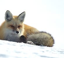 Red Fox   #3417 by JL Woody Wooden