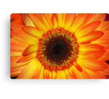 Pocket Full of Sunshine Canvas Print