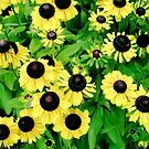Yellow and Black Flowers  by Carrie Jackson