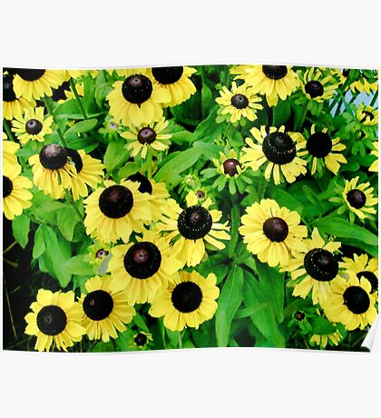 Yellow and Black Flowers  Poster