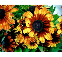Orange Flowers Photographic Print
