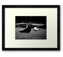 Mother and Baby Seals Framed Print