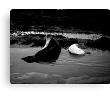 Mother and Baby Seals Canvas Print