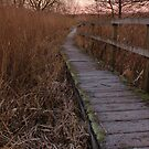 Boardwalk through the marshes by rosiephoto