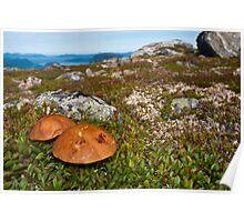 Troll's mushrooms in Norwegian Mountains.  Poster