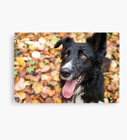 Autumn Eyes Canvas Print