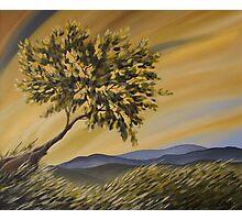 Lone Tree Hill Photographic Print