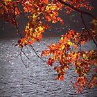 colors de tardor / fall colors by Isabel  Rosero
