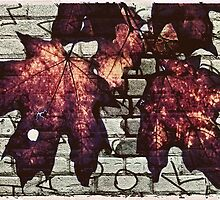 Fall Leaves by susan stone