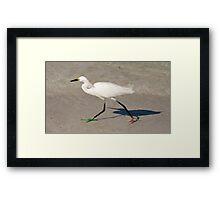 Snowy Egret - Red Green Morph Framed Print