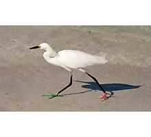 Snowy Egret - Red Green Morph Photographic Print