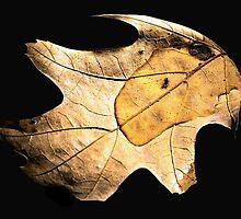 The Leaf  by LaFleureRouge1