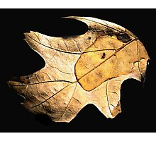 The Leaf  Photographic Print