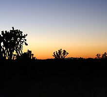 Cima Dome, Mojave National Preserve, California by Chris Clarke