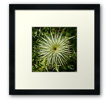 Mixed emotions... Framed Print