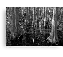 Cypress Canvas Print