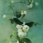 Snowberries by Priska Wettstein