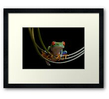The frogs hammock Framed Print
