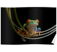 The frogs hammock Poster