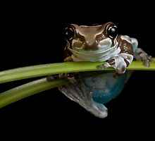 The happy frog by Angi Wallace