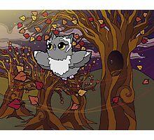 Autumn Owl Photographic Print