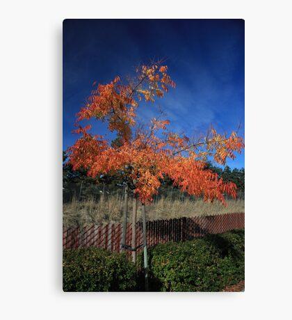 Warm Fall Day Canvas Print