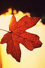 Her smallest leaf by Joshua Greiner