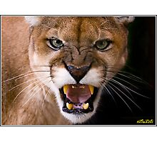 Apache - The Florida Panther Photographic Print