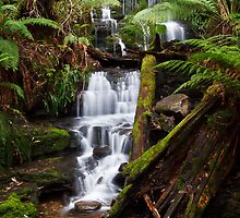 Myrtle Gully Falls, Hobart #4 by Chris Cobern