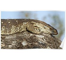 Monitor lizard on tree Poster