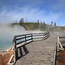 Yellowstone National Park by Frank Romeo