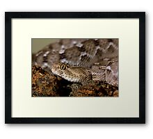 Saw scale viper Framed Print
