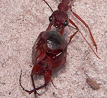 Ant Conundrum  by Tom Newman