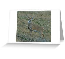Whitetail Buck #144 Greeting Card
