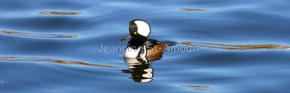 The Hooded Merganser (Male) by Jeannine St-Amour