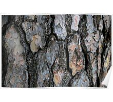 Bark Abstract Poster