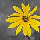 Wild Flower 2 by Jeff Ore