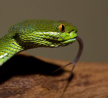 Bamboo viper 2 by AngiNelson