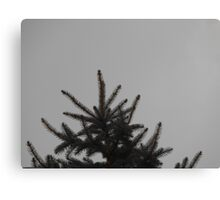 Desolate Winter  Canvas Print