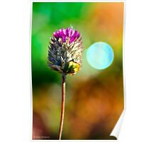 Purple flower and Autumn bokeh  Poster
