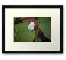 Cloudless Sulphur Butterfly Framed Print