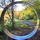 Hemlock Circle by shutterbug2010
