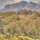 High Country Serenade - Mount Stirling, Victoria Australia - The HDR Experience by Philip Johnson