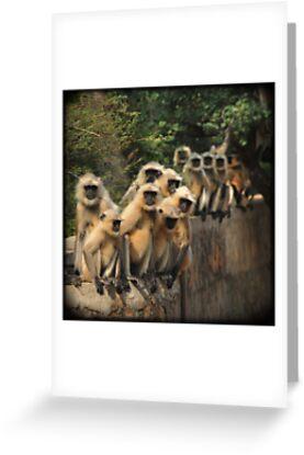Hanuman Langur monkeys by Catherine Ames
