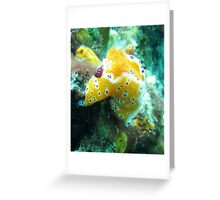 Nudi hanging out at Robb's Jetty Greeting Card