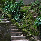 Mystery Stairway by ImagesbyDi