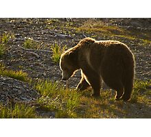 Grizzly Bear-Signed   #4571 Photographic Print