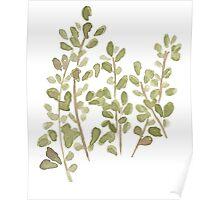 Edible Botanical Marjoram No. 11 Poster
